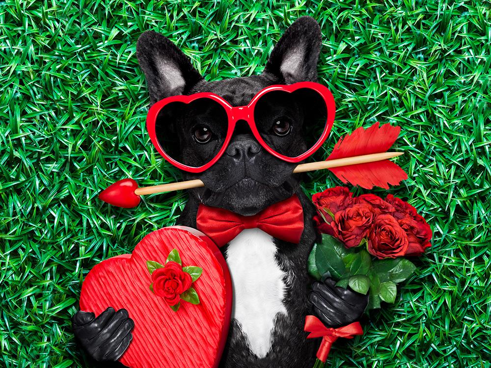 Valentines Day Pet Portrait