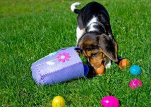 easter eggs dog