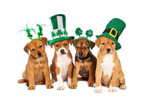 dogs on st patricks day