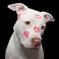 Dog With Kiss Marks